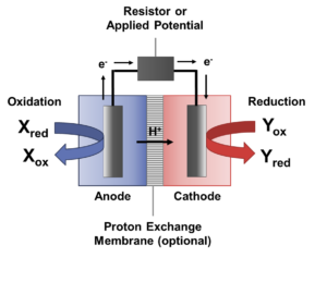 Bioelectrochemical System Schematic